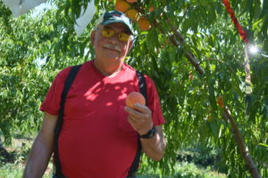 Bob Clark is the owner of Clark's Orchard on Morgan Run Road in Coshocton. This year, his peach trees have produced a beautiful harvest of peaches.