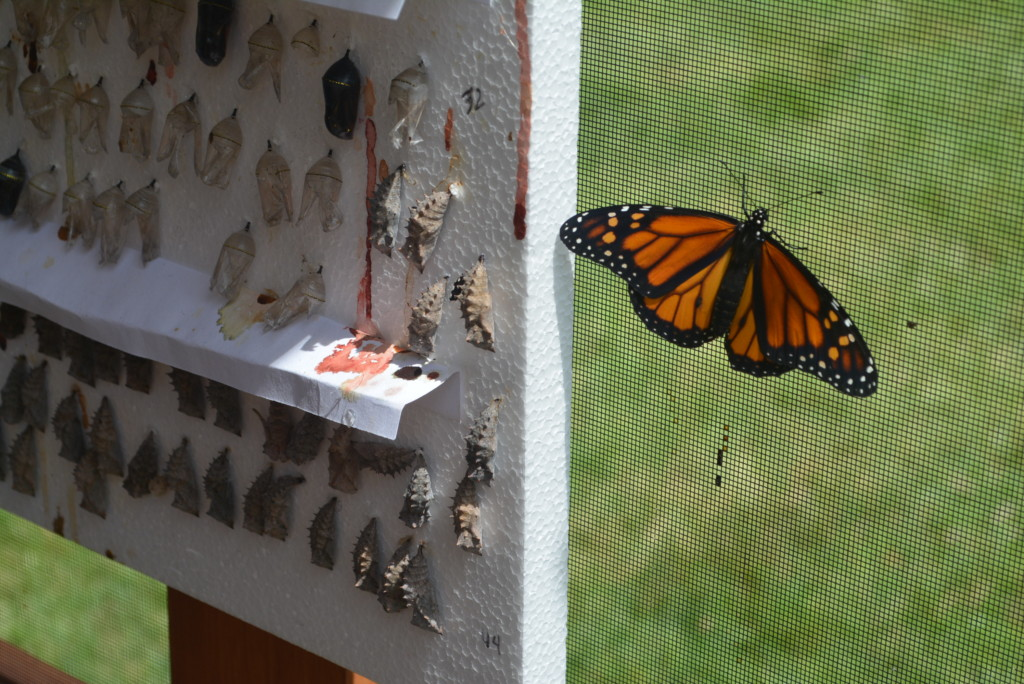 Butterfly exhibit coming to Clary Gardens