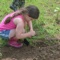 Children help with sunflower festival project
