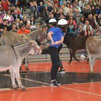 Donkey basketball brings huge crowd to Ridgewood Middle School