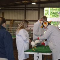 Saturday animal showcases show hard work of exhibitors