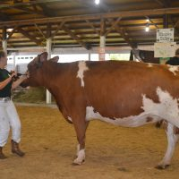 Youth enjoy competing in dairy show