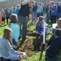 Tree planted in honor of sixth graders
