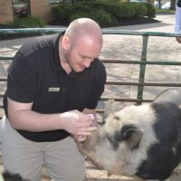 Buehler's manager kisses pig as part of fundraiser