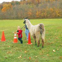 Llama club hosts fun obstacle day