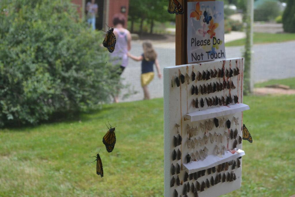 Clary Gardens Butterfly Exhibit02