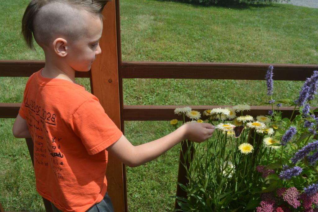 Clary Gardens Butterfly Exhibit04