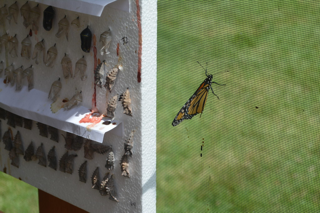 Clary Gardens Butterfly Exhibit07