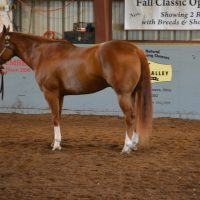 Wesney earns grand champion supreme showmanship title at horse show