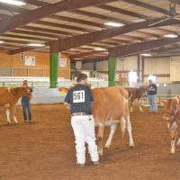Dairy, rabbit and beef shows keep youth busy on Oct. 5 at the fair