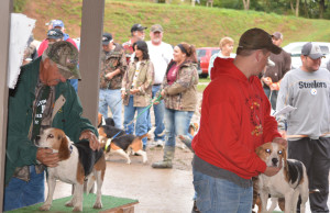 Beagles: The Don McVay Sr. Memorial Beagle Hunt sponsored by the Coshocton County Beagle Club and the McVay Family was held Sept. 10-13, at Schumaker Farms and included a bench show on Saturday. Beacon photo by Josie Sellers