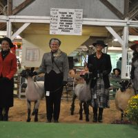 Lamb lead show honors Nancy Porteus