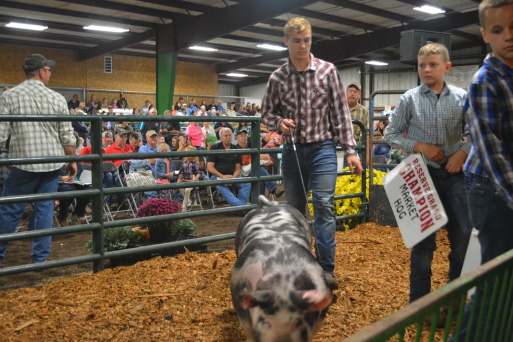 Junior Fair Auction28