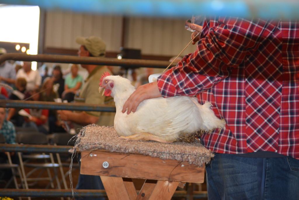 Junior Fair Livestock Auction06