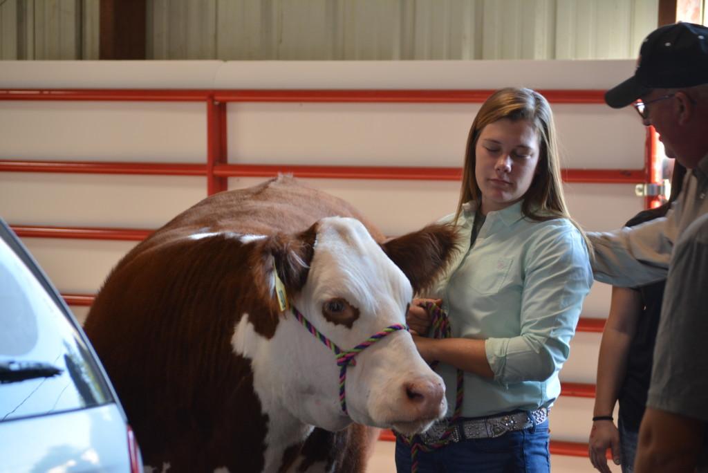 Junior Fair Livestock Auction12