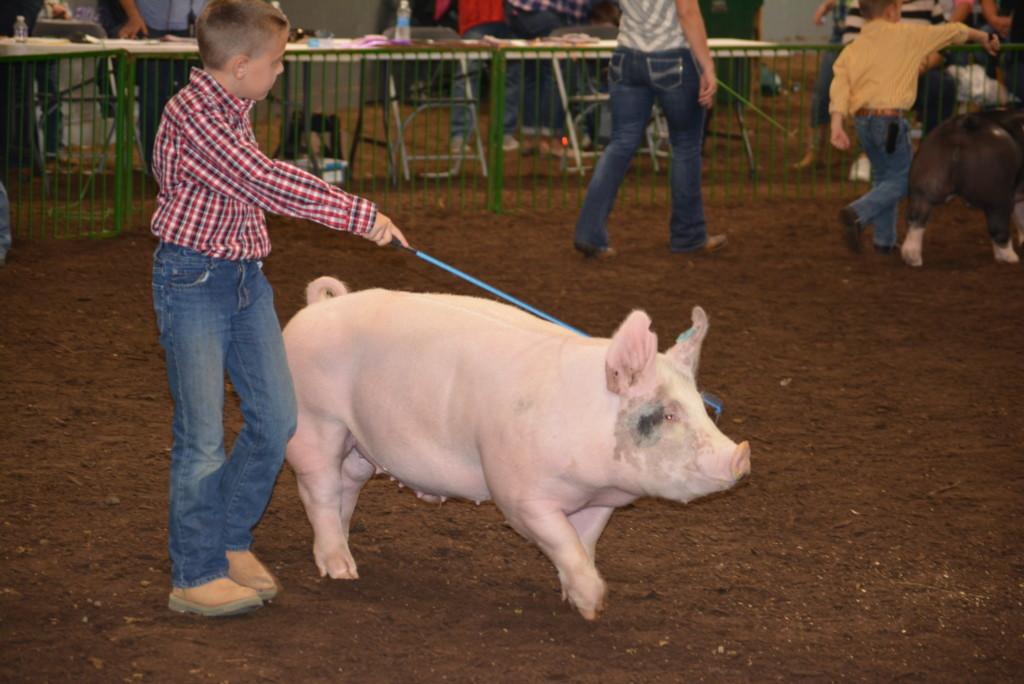 Pee Wee Hog Class13