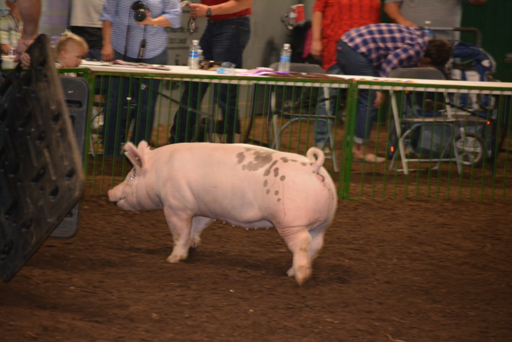 Pee Wee Hog Class14