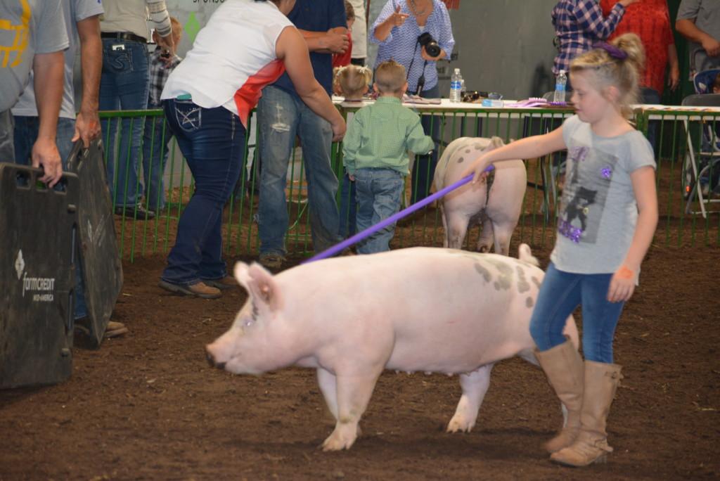 Pee Wee Hog Class15