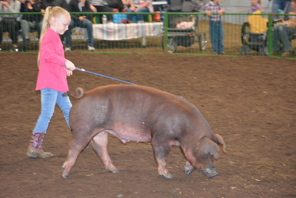 Pee Wee Hog Class16