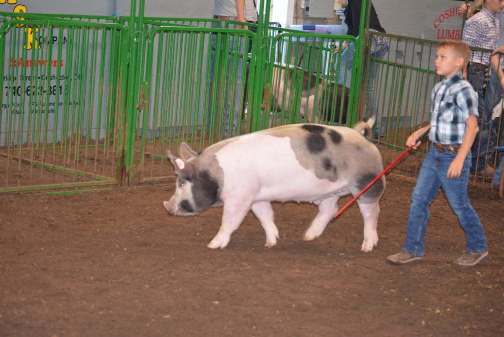Pee Wee Hog Class18