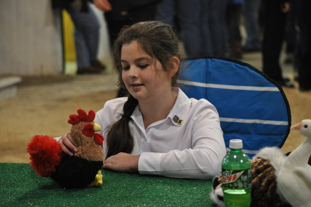Poultry Show03