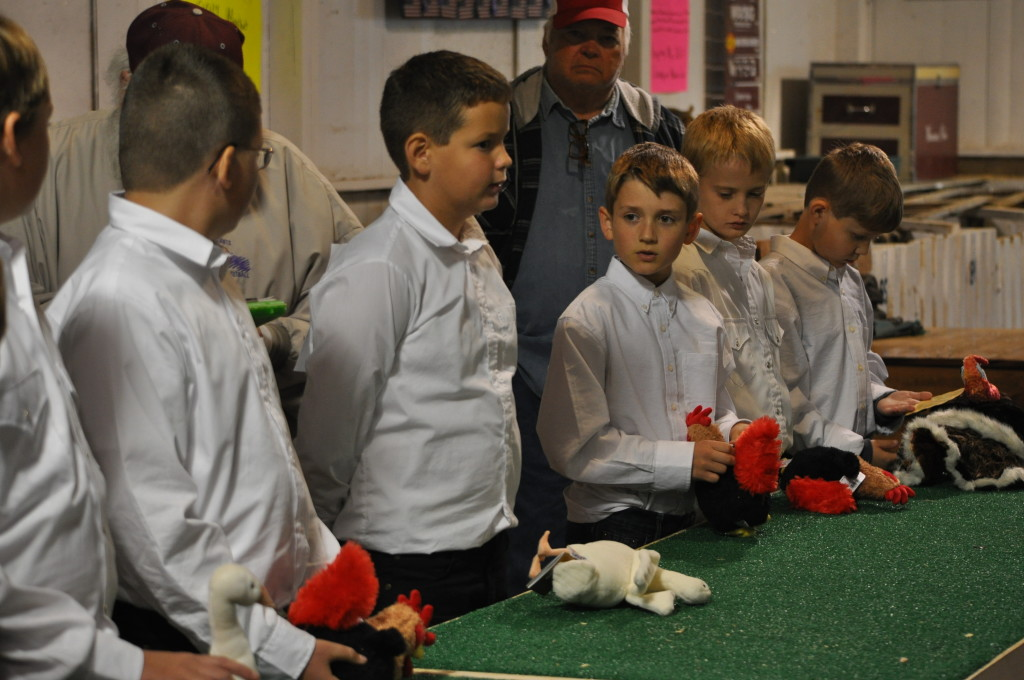 Poultry Show04