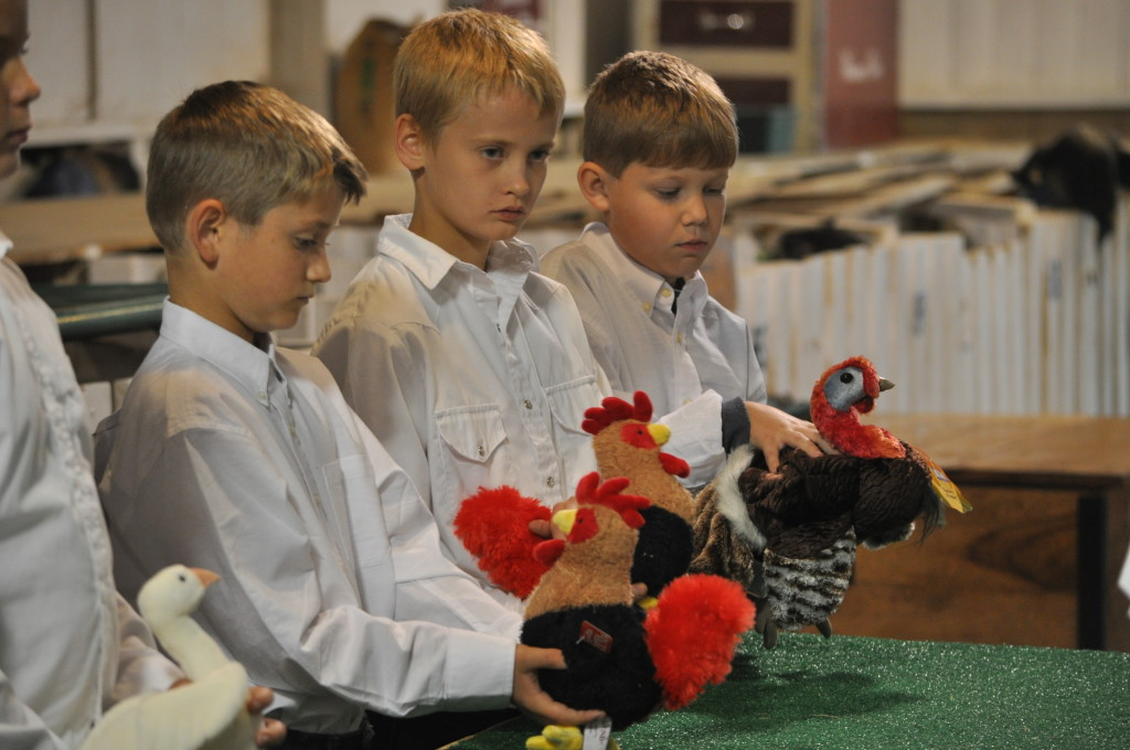 Poultry Show07
