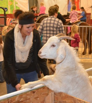 Goat: One of the goats at River View High School's A Touch of Country Christmas decided to jump up and say hi to Brittany Wesney who was at the event with students from Warsaw Elementary School. Beacon photo by Josie Sellers