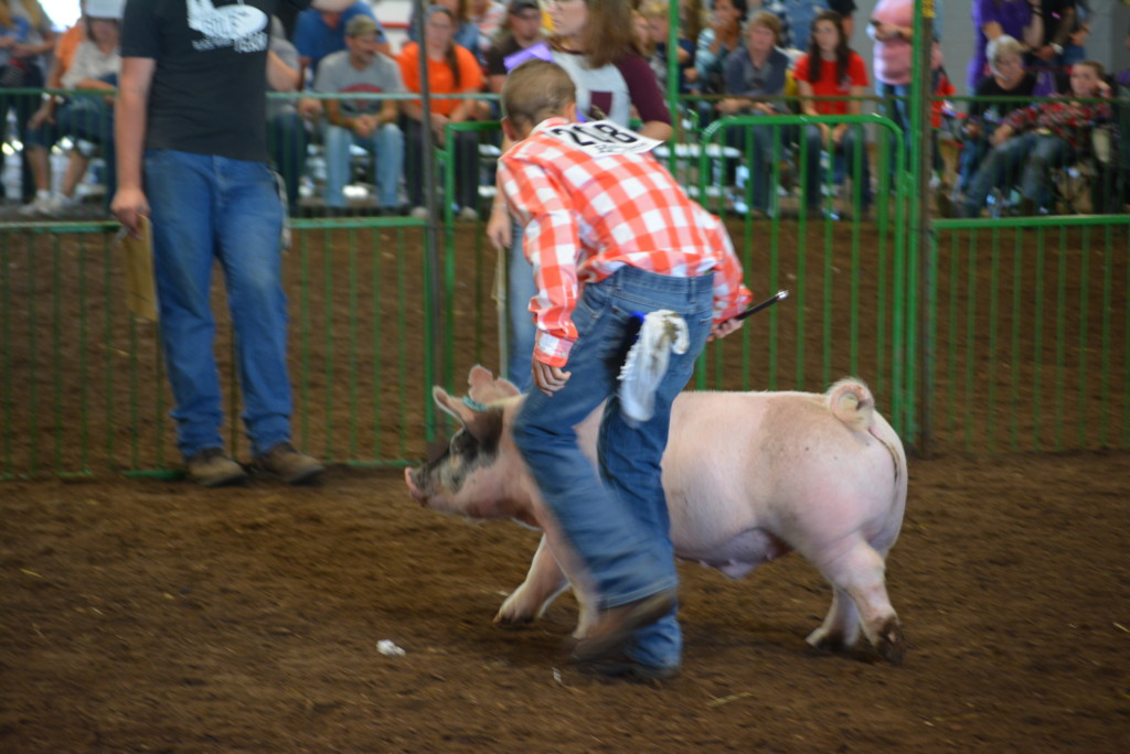 Swine Show01