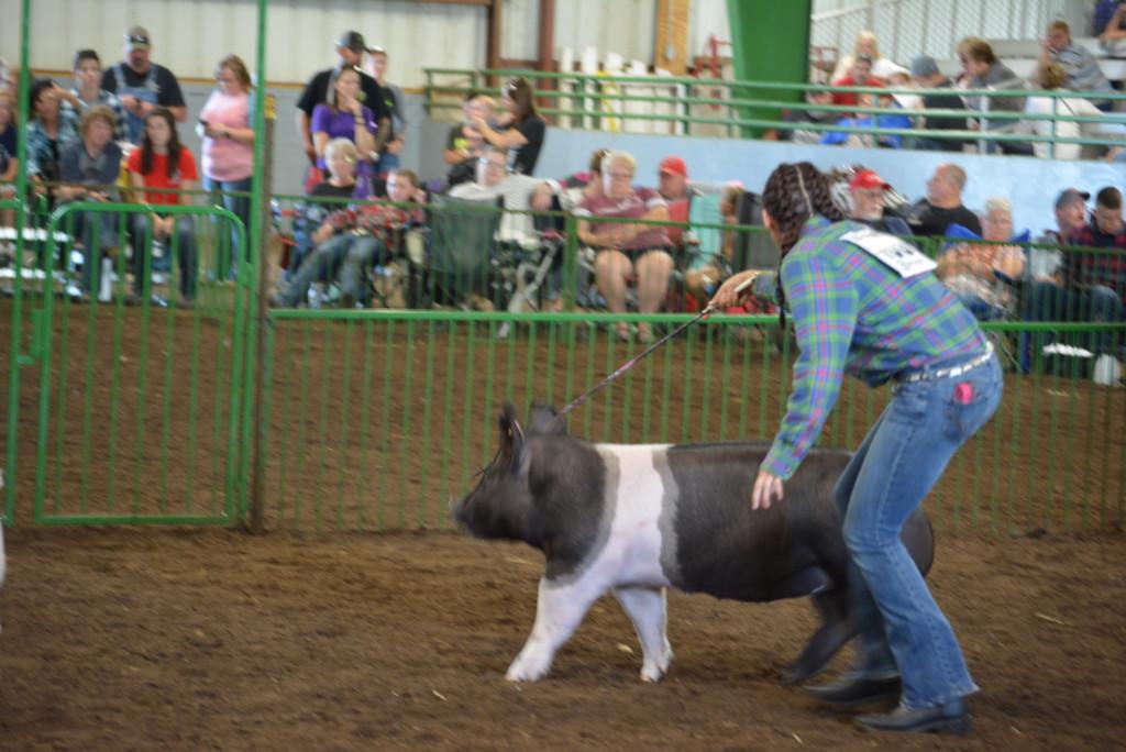 Swine Show02