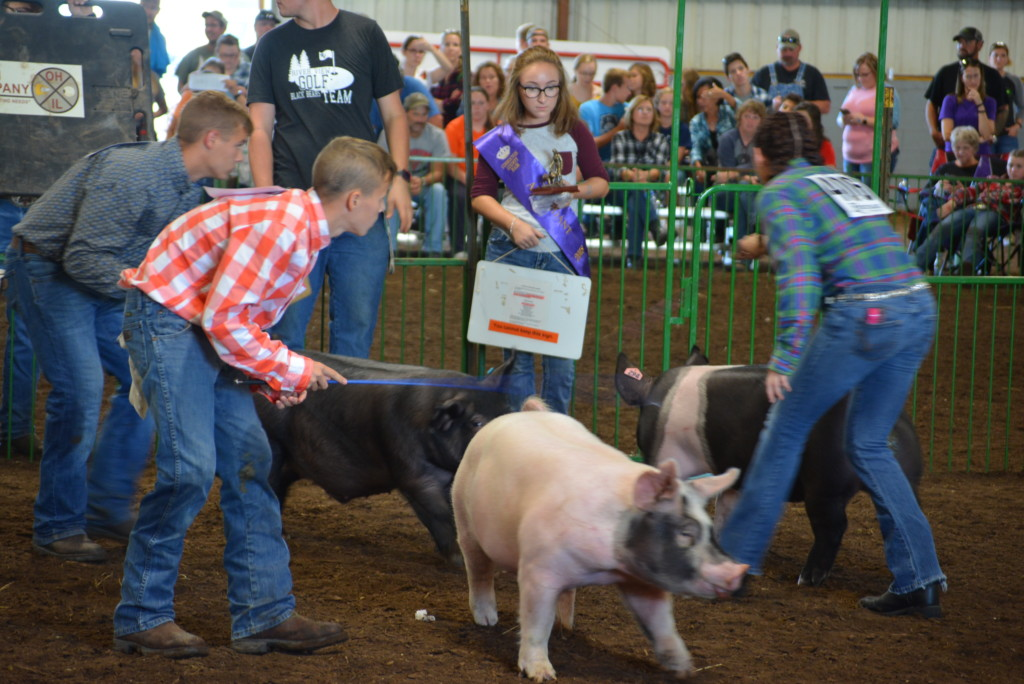 Swine Show03