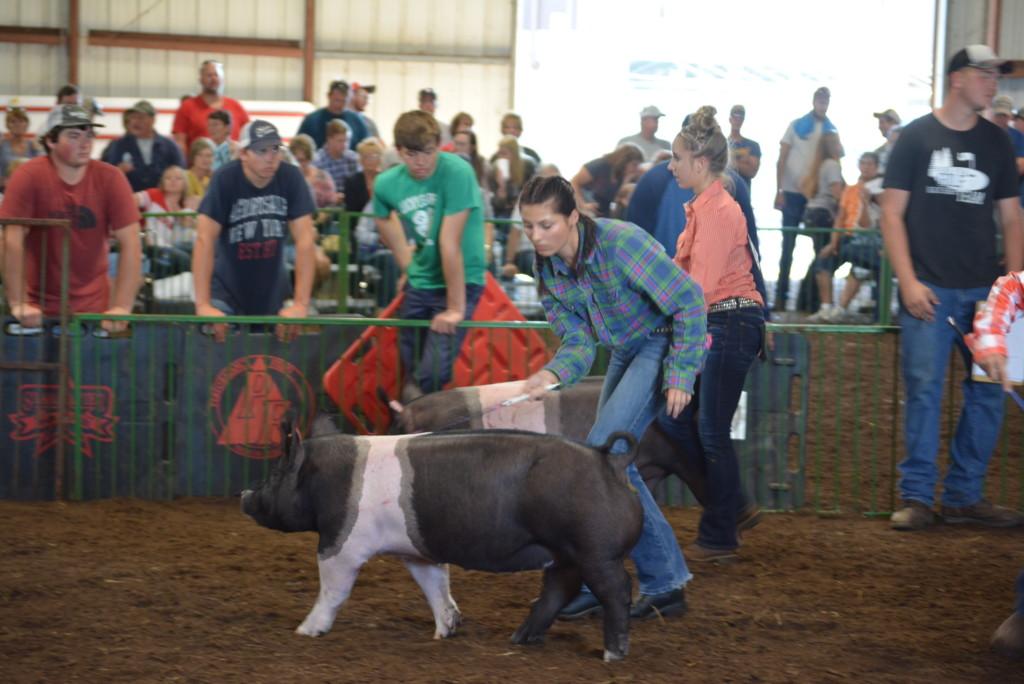 Swine Show04