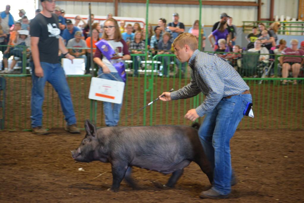 Swine Show05
