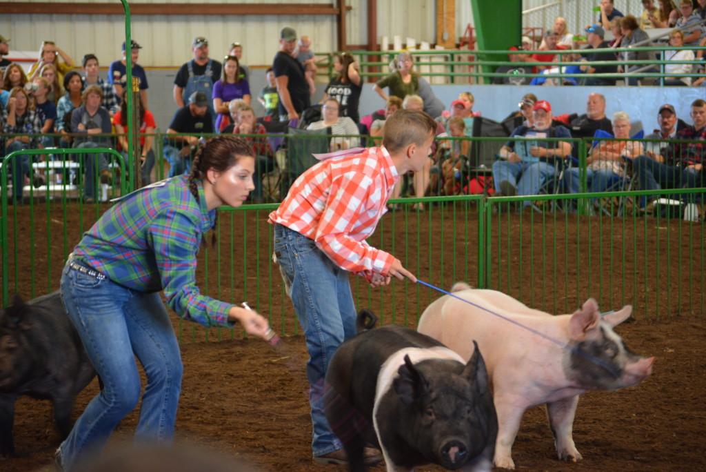 Swine Show08