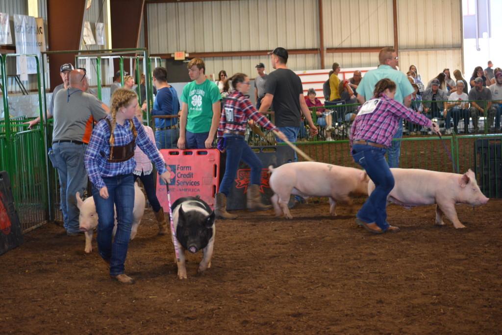 Swine Show09