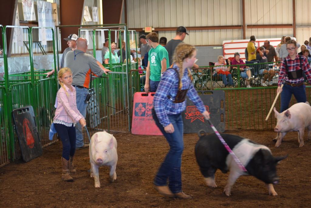 Swine Show10