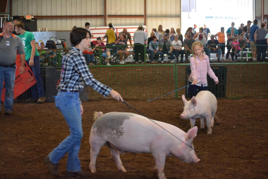 Swine Show11