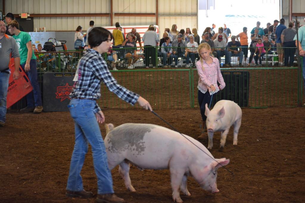 Swine Show12