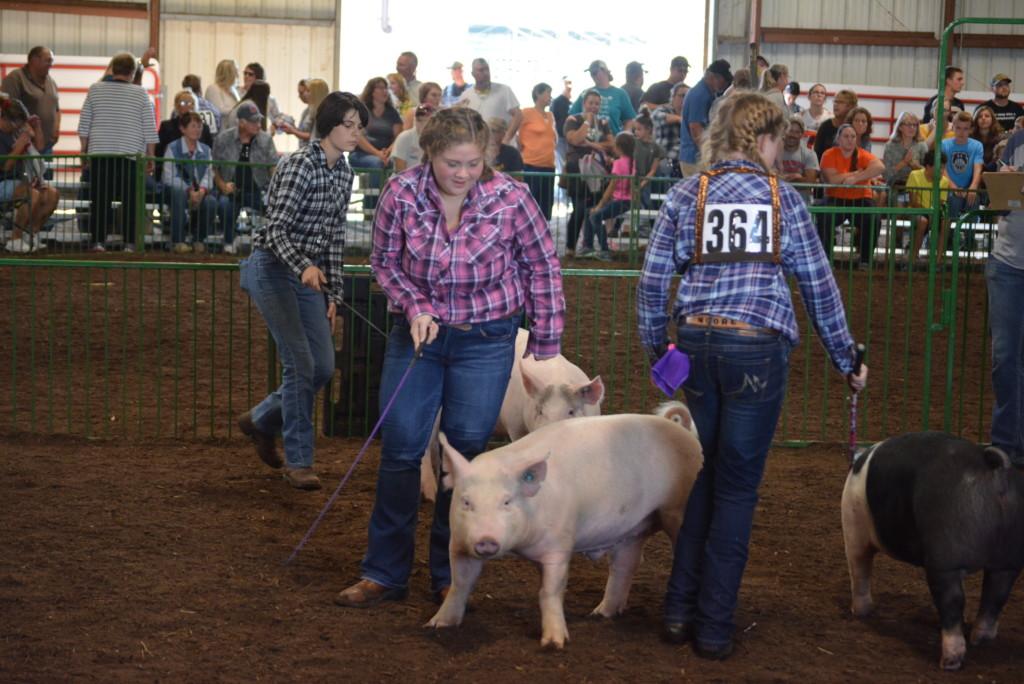 Swine Show13