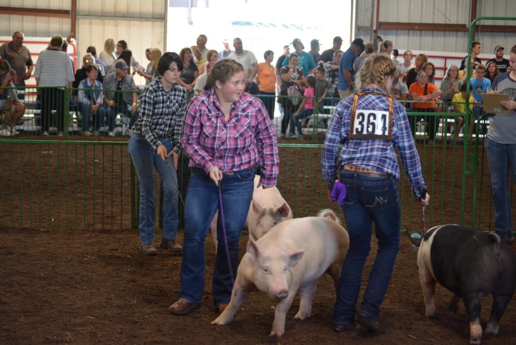 Swine Show14