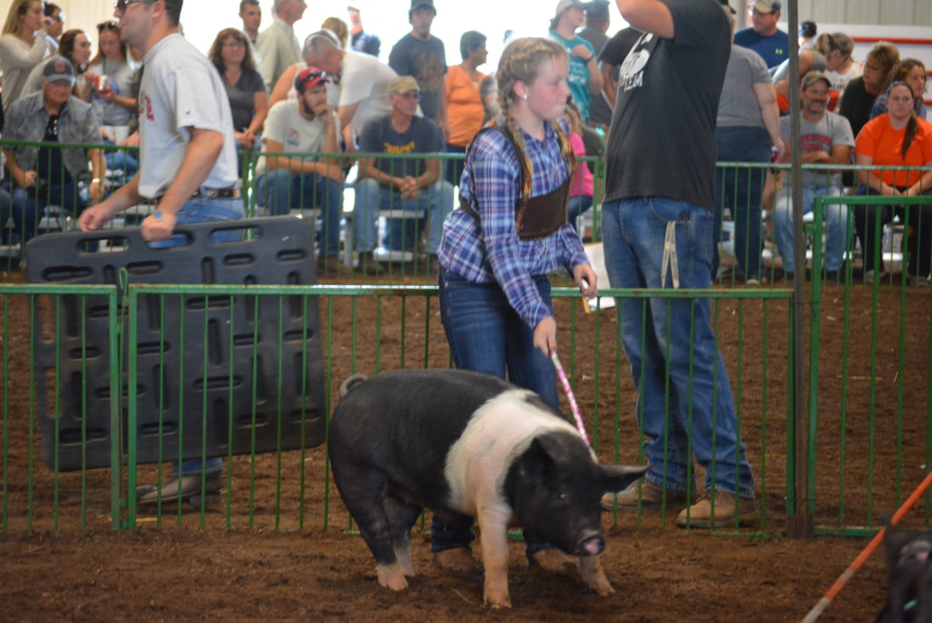 Swine Show15
