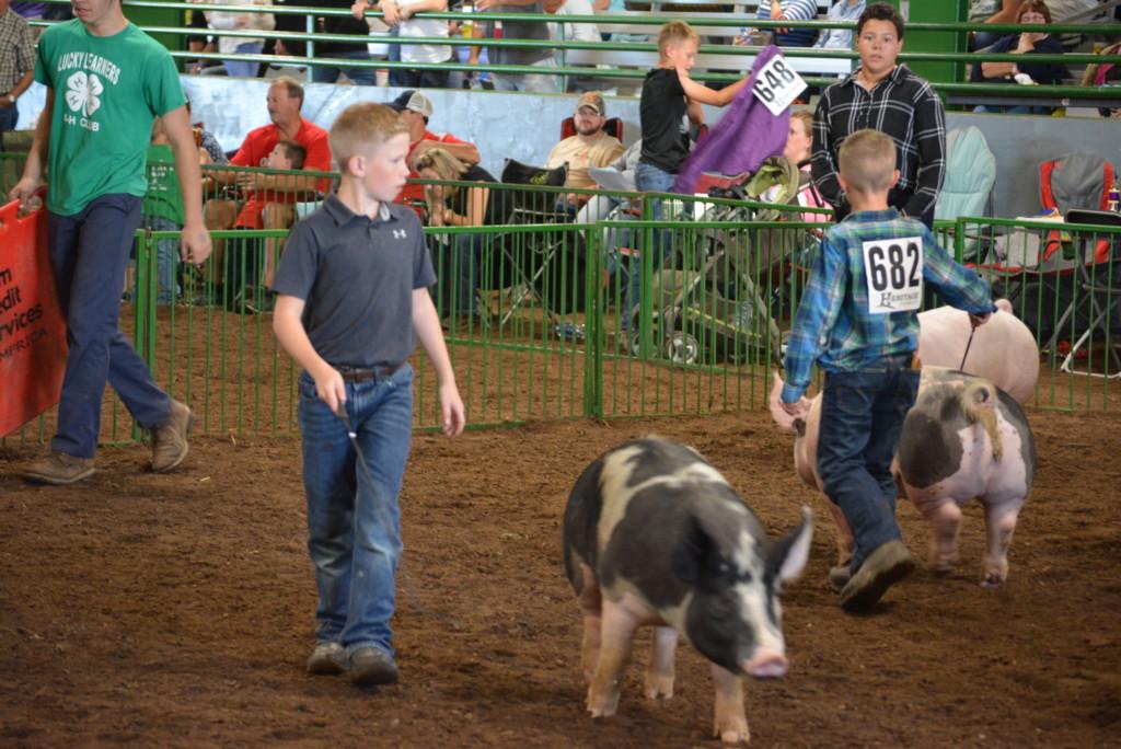 Swine Show16