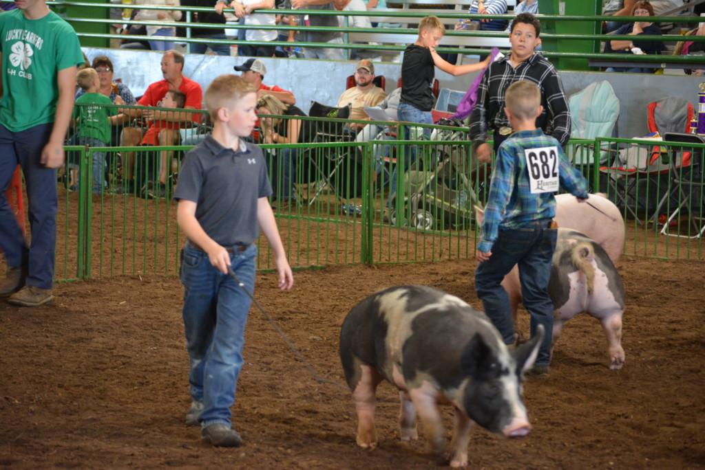 Swine Show17