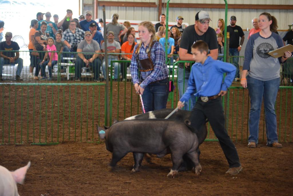 Swine Show18