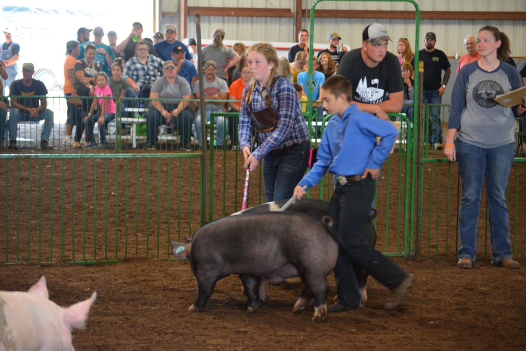 Swine Show19
