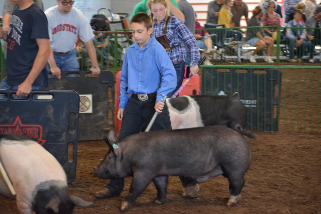 Swine Show20