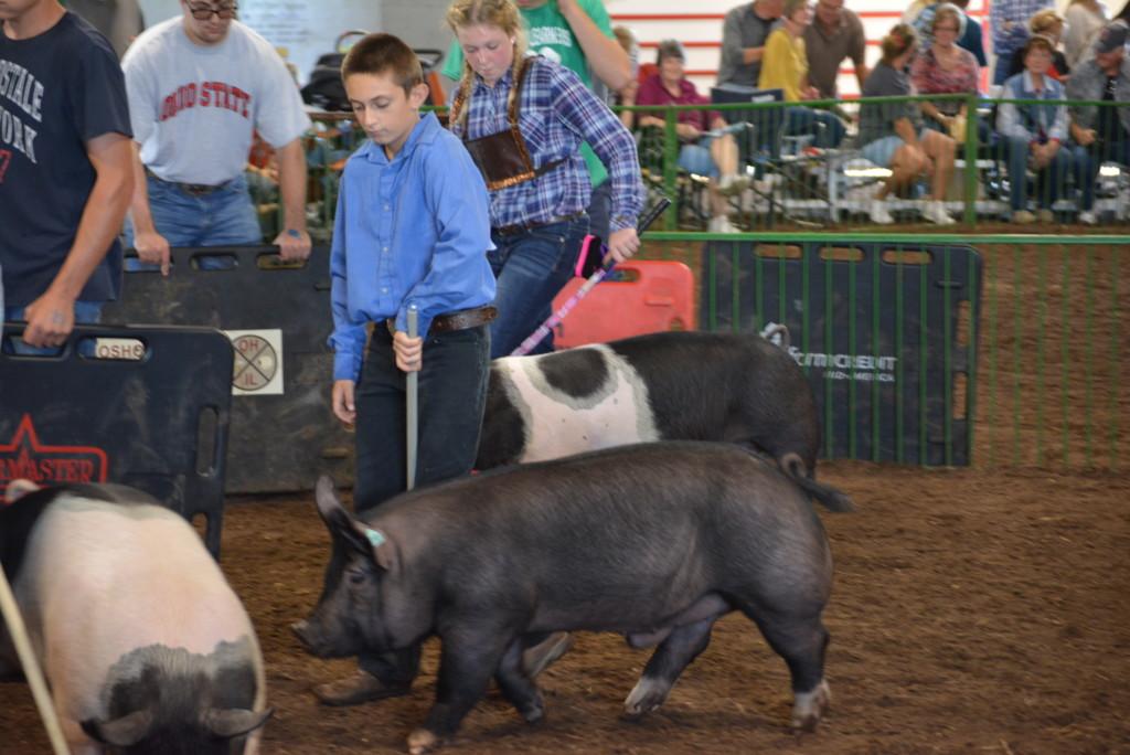 Swine Show21
