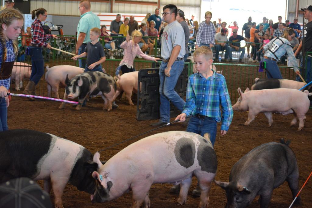 Swine Show22