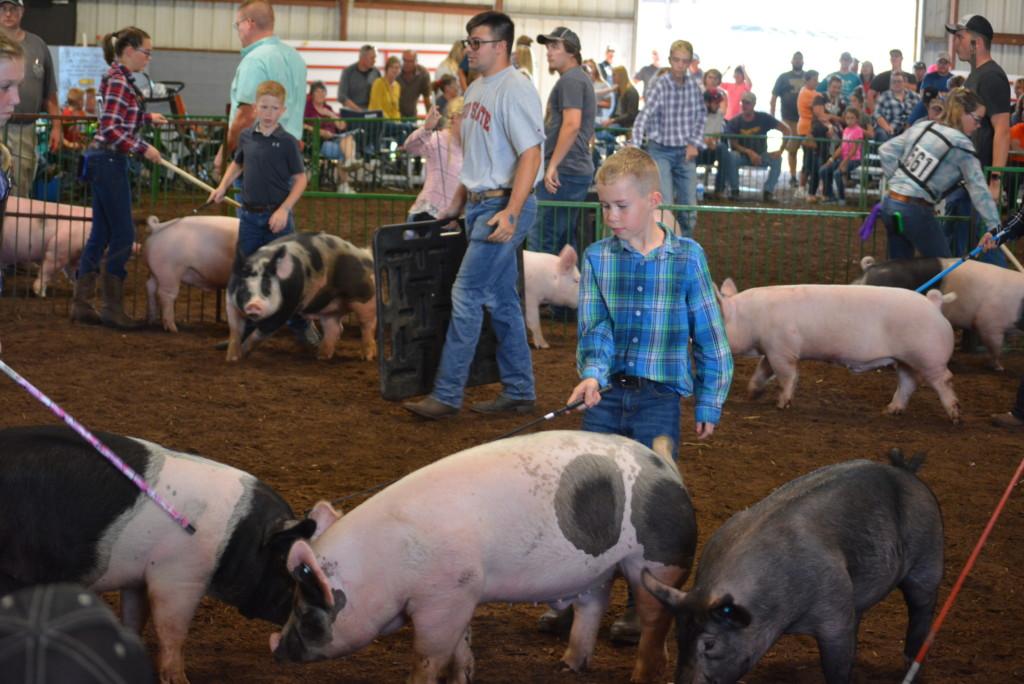 Swine Show23