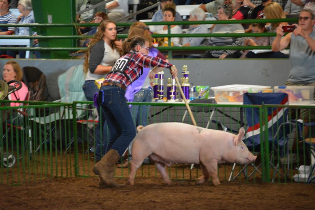 Swine Show26